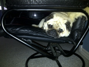 Pug lying on chair