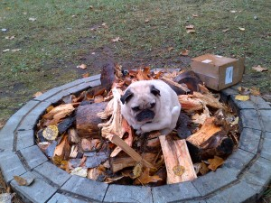 Picture of Pug on the fire pit - with no fire