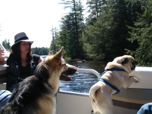 german shepard and pug in a boat