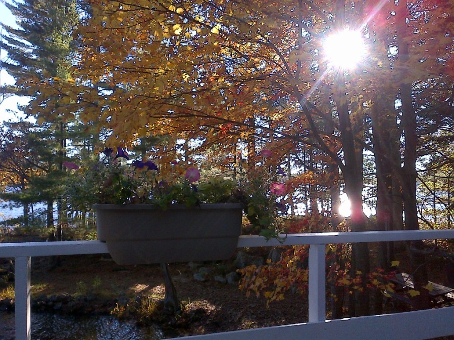 deck railing, sun shining through trees