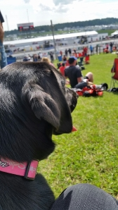 Dog watching race