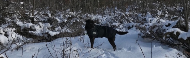 Black dog with white markings standing in snow at Lookout Park