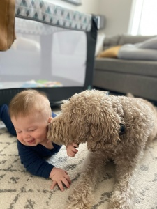 7 month old boy being kissed by his dog who is a brown labradoodle